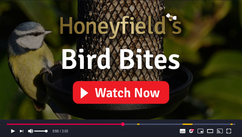 Honeyfield's Bird Bites - Videos covering wild bird feed and care topics