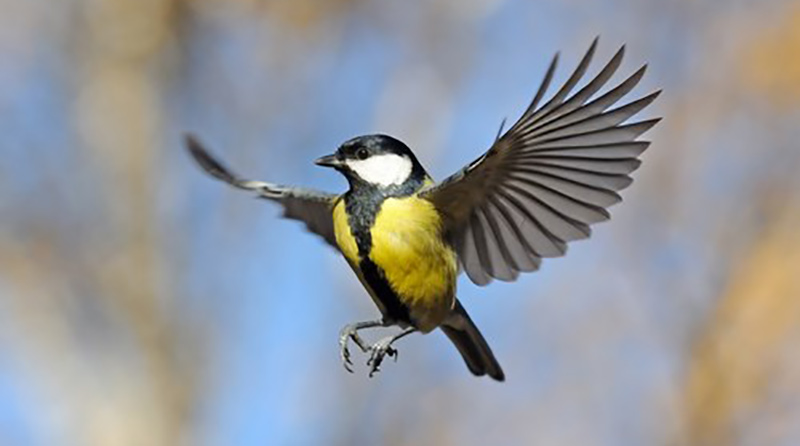Here at Honeyfield's we love all things nature, offering a range of wild bird foods and treats that are accredited to the 'Fair to Nature' conservation grade scheme. We also offer a variety of different wild bird feeders, tables, dining stations and accessories to complement any garden.