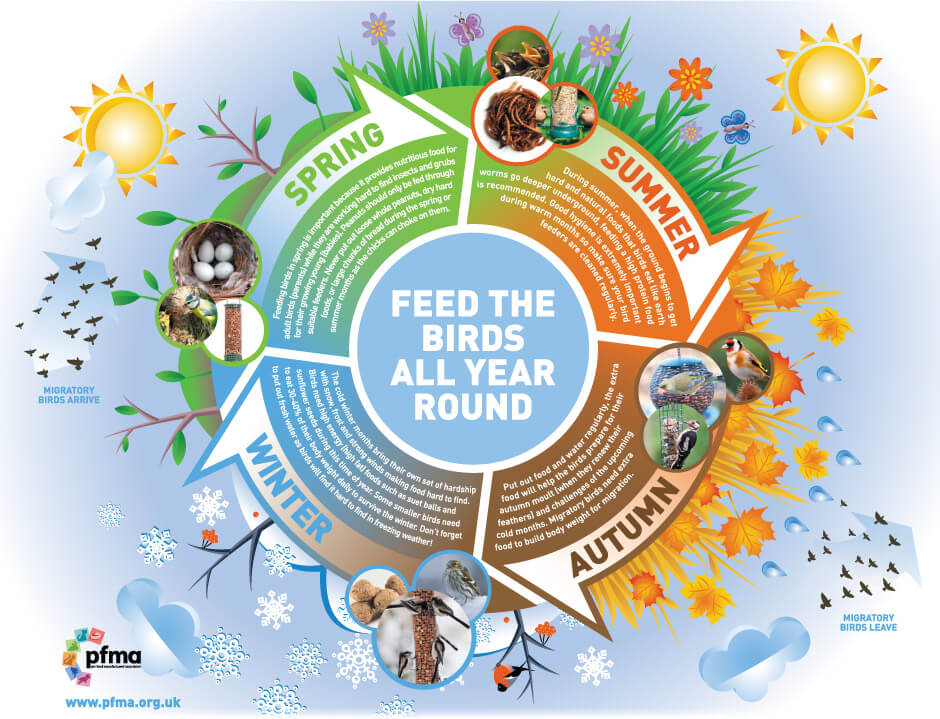 Free Seasonal Wild Bird Feeding Guide